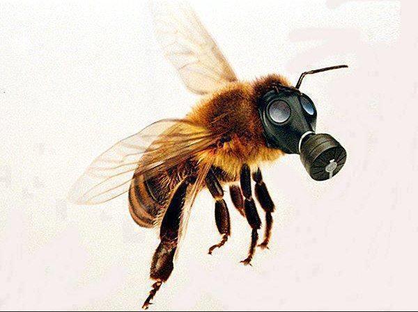 ayuda a las abejas