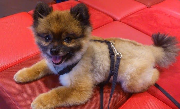 perro pequeño en adopción